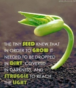 seed quote
